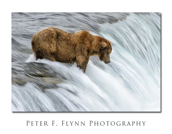 Brooks Falls, Katmai National Park, AK